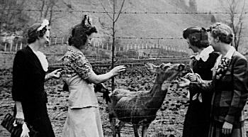 Pike County ladies feed a deer in the Breaks of the Sandy near Elkhorn City.
